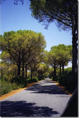 Solo_Travel_Maremma_Road