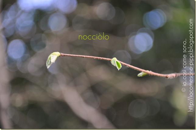 nocciòlo