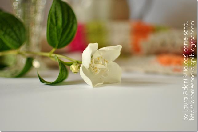fiore d'Angelo3