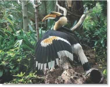 Drying off A hornbill sunbathes after bathing in wet foliage.