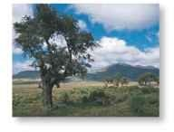 A Plains living Typical parakeet habitat is open woodland in Ethiopia.
