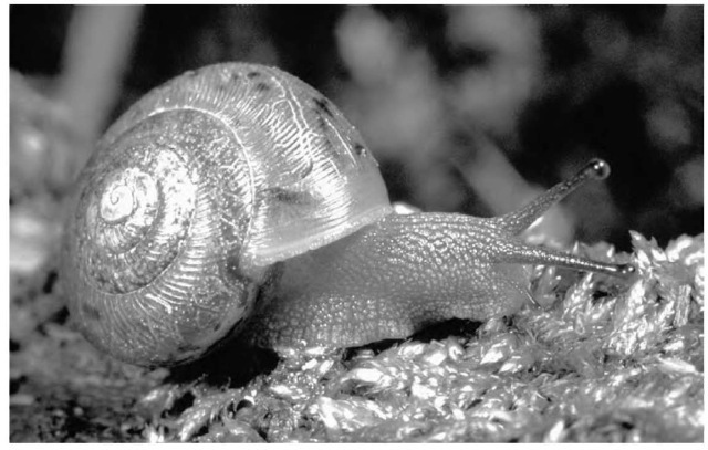 Terrestrial animals whose skins secrete mucus, like the snail, have what scientists call the common chemical sense, which makes them sensitive to the presence of foreign chemicals on the surface OF their bodies.