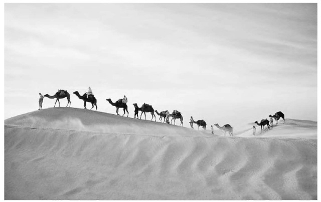 A camel caravan in the Sahara. The world's largest desert, it covers 3.5 million sq. mi. (9 million sq km), but 8,000 years ago this was a region of lush valleys and flowing rivers.