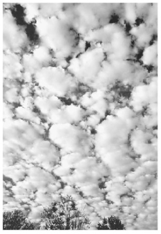 When moisture coalesces in the atmosphere, it forms a cloud. Altocumulus clouds, which look like oval-shaped. dense. puffy balls, are midlevel clouds.
