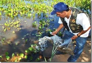 peixe_pantanal