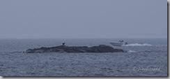 20081108-Grimstad 060