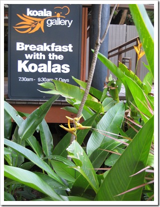 The perfect place to have breakfast with the Koalas