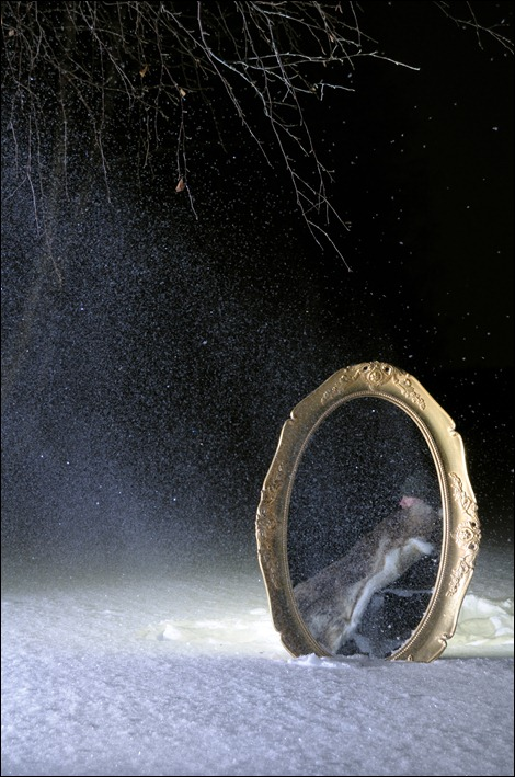 Winternight Reflection
