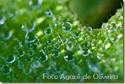 Orvalho (1)