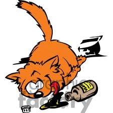 gato-morto