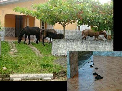 Rincao-cavalos-2