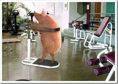 Funny fitness pictures | The fitness pig.