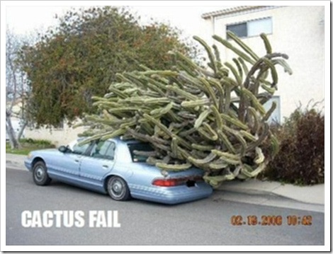 Car with giant cactus fails.