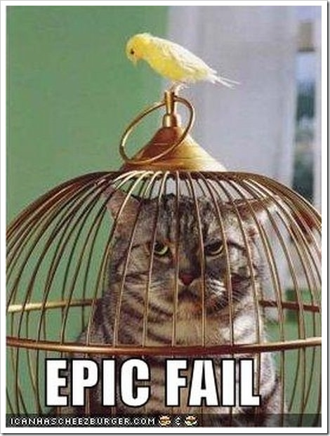 Cat inside a birds cage.