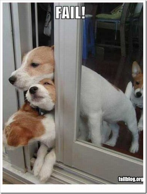 Cute dogs trying to escape the house.