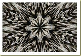 lichen mandala