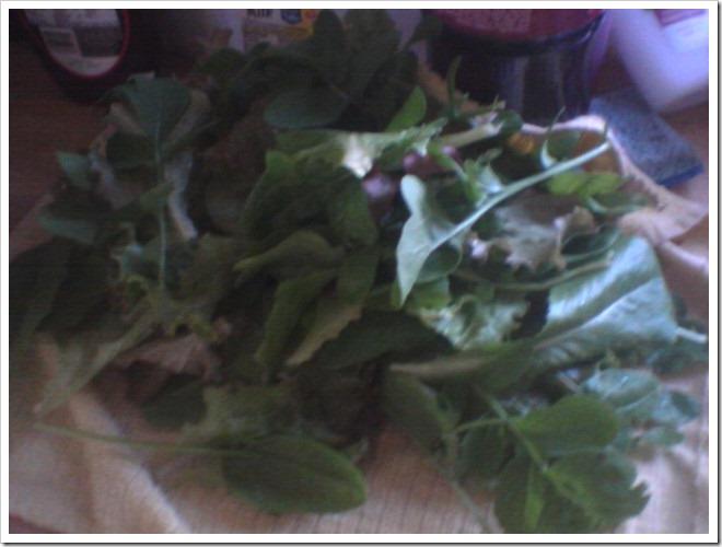lettuce 430