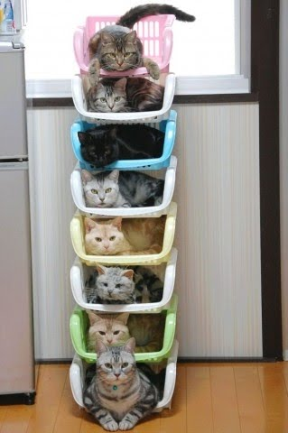 How to Organize Kitties.jpg