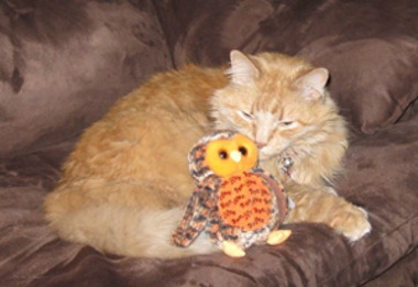 Kitty kissing owl smaller.jpg