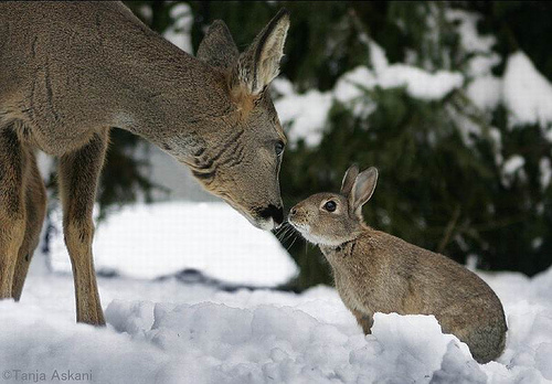Bambi and Thumper.jpg