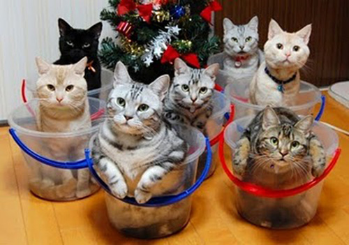Organize Kitties Tubs.jpg