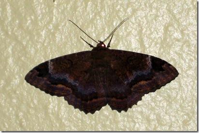 Funky Moth1