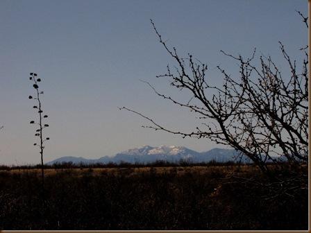 Huachuca Mtns