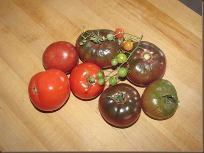 My tomato crop2