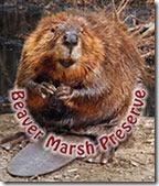 beaver-marsh-preserve