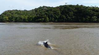 Boca Chica, Rio Tuira, Darien.