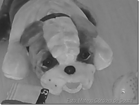 Vida de cacorro-Bulldog
