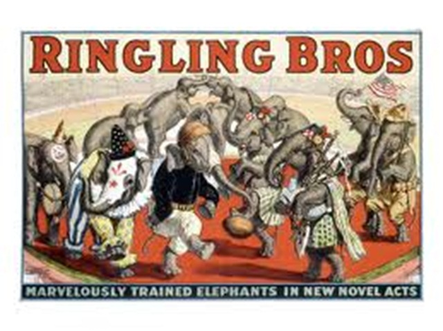Ringling Bros Elephants