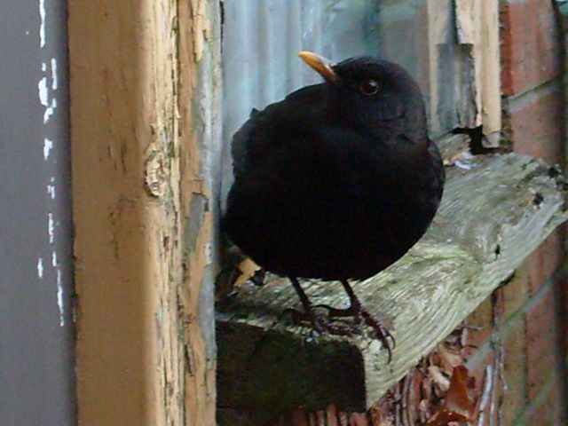 [window sill bird[2].jpg]