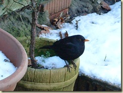plant pot birdie