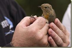 robin closer