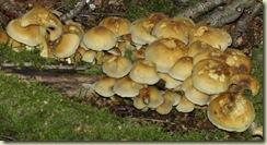 fungus 24