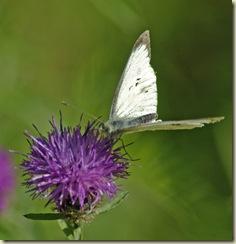 white 2 flower