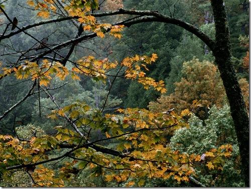 autumn_25