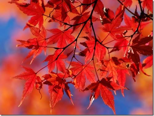 autumn_20