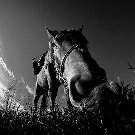 Ok, tažke druhý deň fotofýzvy a máme tu ďaľšiu fotografiu, ďalej vyzývam majiteľku koňa Lucia Grancová, aby taktiež 5 dni po sebe pridal čiernobiely záber a každý deň vyzval niekoho daľšieho k rovnakej činnosti. by Matúš Granec - Animals Horses