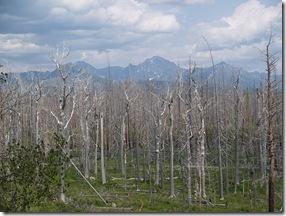 florestafogo