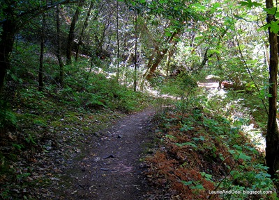 A shady trail at Bothe Napa State Park