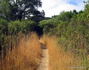 Trail to Sugerloaf Mountain in Napa