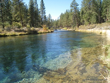 Clear blue water of Spring Creek, a short walk from the campground.