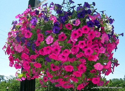 Summer flowers in Montague