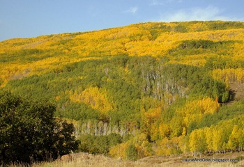 A tapestry of aspen on Boulder Mountain