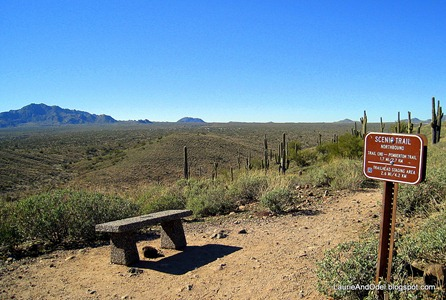 Scenic Trail bench