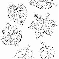 bladeren2.jpg