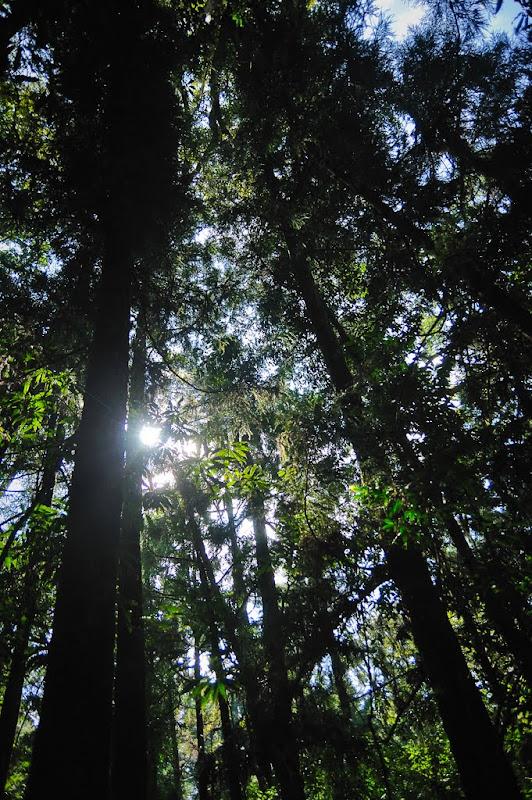 ++ 鹿屈山水漾森林出千人洞 ++