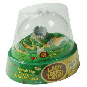 Ladybugland